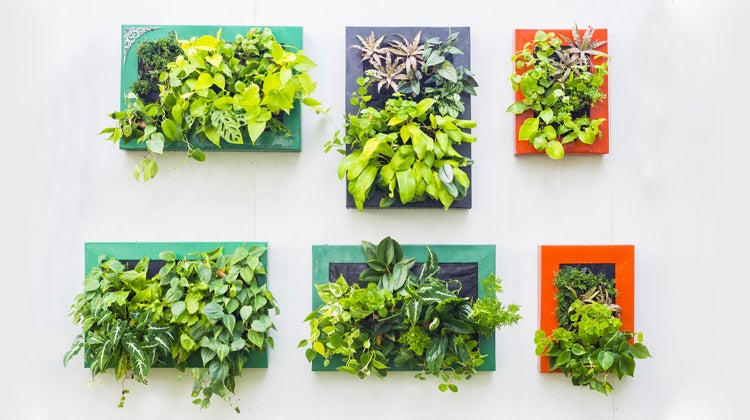 Green leafy plants in square boxes
