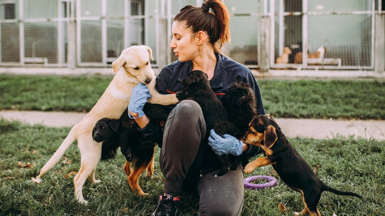 Women playing with small puppies