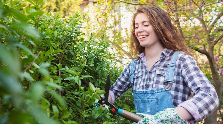 Smiling woman pruning a hedge